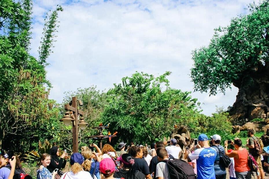Discovery Island at Animal Kingdom