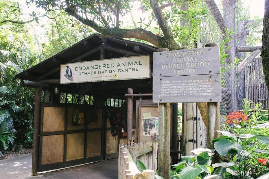 Gorilla Falls Trail Entrance at Animal Kingdom