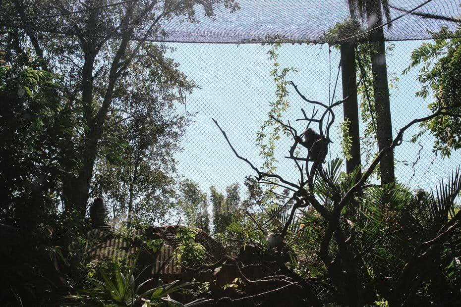 Animals on the Maharajah Jungle Trek