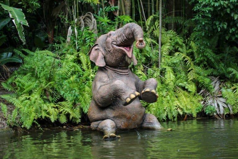 Jungle Cruise at Magic Kingdom